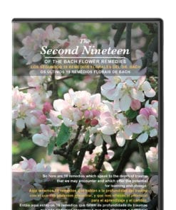 DVD Second Nineteen