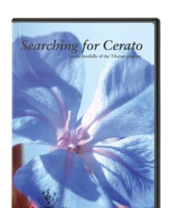 DVD Searching for Cerato