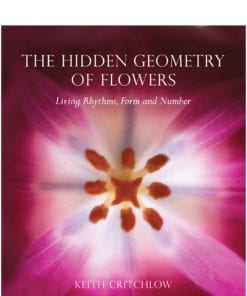 Hidden Geometry of Flowers